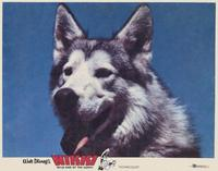 Nikki Wild Dog of the North - 11 x 14 Movie Poster - Style C