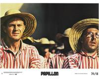 Papillon - 8 x 10 Color Photo #3