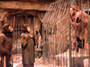Planet of the Apes - 8 x 10 Color Photo #3