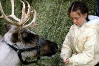 Prancer - 8 x 10 Color Photo #2