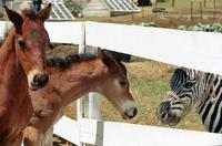 Racing Stripes - 8 x 10 Color Photo #16