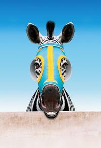 Racing Stripes - 8 x 10 Color Photo #21