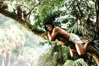 Rudyard Kipling's The Jungle Book - 8 x 10 Color Photo #2