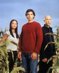 Smallville (TV) - 8 x 10 Color Photo #032