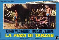Tarzan Escapes - 11 x 14 Poster Italian Style A