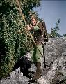 The Adventures of Robin Hood - 8 x 10 Color Photo #3