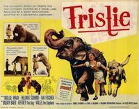 Bashful Elephant - 11 x 14 Movie Poster - Style A