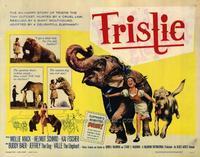 Bashful Elephant - 22 x 28 Movie Poster - Half Sheet Style A