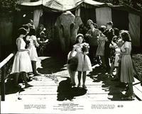 Bashful Elephant - 8 x 10 B&W Photo #1