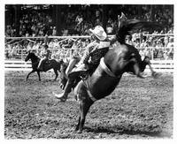 The Great American Cowboy - 8 x 10 B&W Photo #3