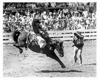 The Great American Cowboy - 8 x 10 B&W Photo #4
