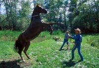 The Horse Whisperer - 8 x 10 Color Photo #14