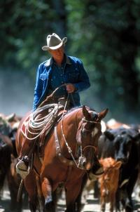 The Horse Whisperer - 8 x 10 Color Photo #15