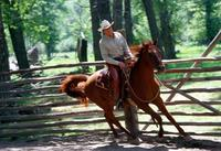 The Horse Whisperer - 8 x 10 Color Photo #16