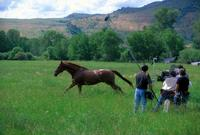 The Horse Whisperer - 8 x 10 Color Photo #18
