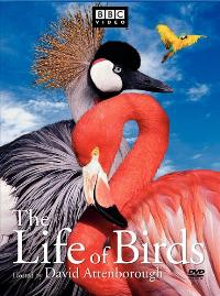 The Life of Birds (TV) - 11 x 17 TV Poster - Style A