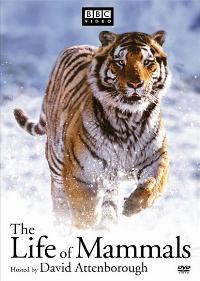 The Life of Mammals (TV) - 27 x 40 TV Poster - Style B