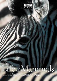 The Life of Mammals (TV) - 11 x 17 TV Poster - Style B