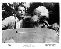 The Shaggy Dog - 8 x 10 B&W Photo #3