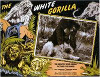 The White Gorilla - 11 x 14 Movie Poster - Style A