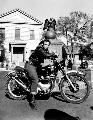 The Wild One - 8 x 10 B&W Photo #7