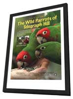 The Wild Parrots of Telegraph Hill - 11 x 17 Movie Poster - Style A - in Deluxe Wood Frame