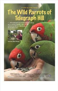 The Wild Parrots of Telegraph Hill - 11 x 17 Movie Poster - Style A