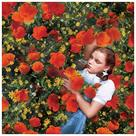 The Wizard of Oz - Dorothy Poppies Canvas Art
