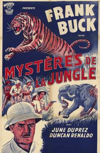 Tiger Fangs - 11 x 17 Movie Poster - French Style A