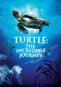 Turtle: The Incredible Journey - 11 x 17 Movie Poster - Style A