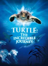Turtle: The Incredible Journey - 11 x 17 Movie Poster - Style B