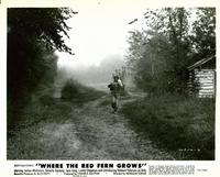 Where the Red Fern Grows - 8 x 10 B&W Photo #8