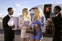 White Chicks - 8 x 10 Color Photo #1