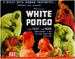 White Pongo