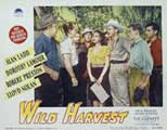 Wild Harvest - 11 x 14 Movie Poster - Style E