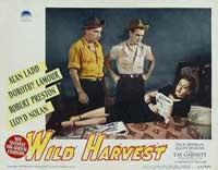 Wild Harvest - 11 x 14 Movie Poster - Style B