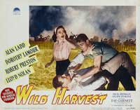 Wild Harvest - 11 x 14 Movie Poster - Style C