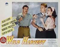 Wild Harvest - 11 x 14 Movie Poster - Style G