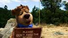 Yogi Bear - 8 x 10 Color Photo #13