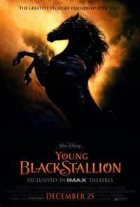 Young Black Stallion - 27 x 40 Movie Poster - Style A