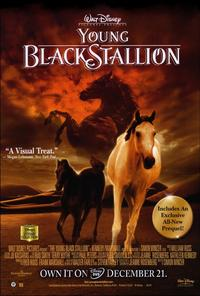 Young Black Stallion - 27 x 40 Movie Poster - Style B