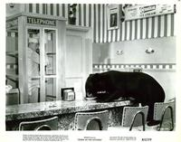 Zebra in the Kitchen - 8 x 10 B&W Photo #1